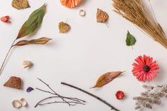 Kreativer Herbst eingestellt mit trockenen Anlagen Stockfotografie