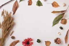 Kreativer Herbsthintergrund mit leerem Raum Lizenzfreie Stockfotografie