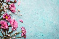 Kreativer Naturhintergrund des Frühlings-Sommers Rosa Blumengrenze an stockfoto
