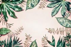 Kreativer Naturrahmen gemacht von den tropischen Palmen- und Farnblättern auf Pastellhintergrund lizenzfreies stockfoto