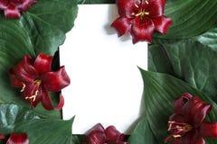 Kreativer Plan gemacht von den tropischen Blättern und von den roten Lilienblumen mit Karte des leeren Papiers Stockfotografie