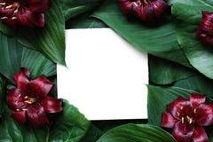 Kreativer Plan gemacht von den tropischen Blättern und von den roten Lilienblumen mit Karte des leeren Papiers Flache Lage Spott  Stockbild