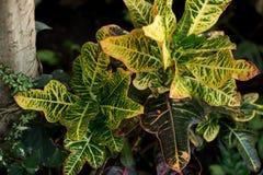 Kreatywnie natura układ robić tropikalni liście i kwiaty Mieszkanie nieatutowy pojęcia tła ramy piasek seashells lato zdjęcia stock