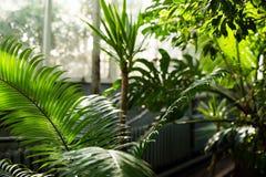 Kreatywnie natura układ robić tropikalni liście i kwiaty Mieszkanie nieatutowy pojęcia tła ramy piasek seashells lato zdjęcie stock