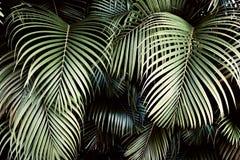 Kreatywnie natura układ robić tropikalni liście i kwiaty Mieszkanie nieatutowy pojęcia tła ramy piasek seashells lato Zdjęcie Royalty Free