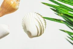 Kreatywnie nautyczny lata poj?cie Pi?kne denne skorupy r??ni kszta?t?w kolory zieleniej? palmowego li?? na bia?ym tle wellness zdjęcie royalty free