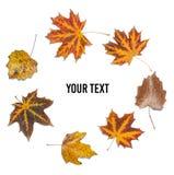 Kreatywnie okrąg spadać jesień liście na białym tle zdjęcie stock