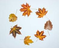 Kreatywnie okrąg spadać jesień liście na białym tle Odgórny widok, minimalizm fotografia royalty free