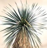 Kreatywnie palma w naturze fotografia stock