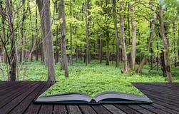 Kreatywnie pojęcie strony książkowy Wibrujący bujny zielenieją wiosna las Fotografia Stock