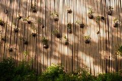Kreatywnie puszkować kwiaty na bambus ścianie Zdjęcie Stock