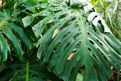 Kreatywnie tropikalna zieleń opuszcza układ Natury wiosny pojęcie Mieszkanie nieatutowy, tło zdjęcie stock