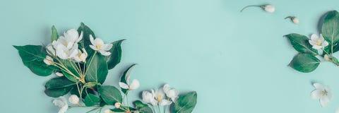 Kreatywnie układ z kwitnącą jabłonią na błękitnym tle Mieszkanie nieatutowy Pojęcie - wiosna minimalizm fotografia stock