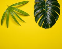Kreatywnie układ robić kolorowi tropikalni liście na żółtym tle Minimalnego lata egzotyczny pojęcie z kopii przestrzenią Rabatowy zdjęcia royalty free