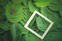 Kreatywnie układ robić kwiaty i liście z papierowej karty notatką Mieszkanie nieatutowy pojęcia odosobniony natury biel fotografia stock