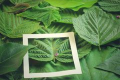 Kreatywnie układ robić kwiaty i liście z papierowej karty notatką Mieszkanie nieatutowy pojęcia odosobniony natury biel obraz royalty free