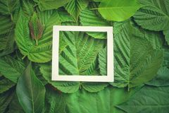 Kreatywnie układ robić kwiaty i liście z papierowej karty notatką Mieszkanie nieatutowy pojęcia odosobniony natury biel zdjęcia royalty free
