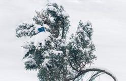 Kreditkort i snön på trädet Begrepp Djupfryst räkenskap Fotografering för Bildbyråer