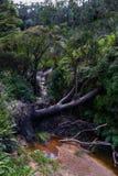 Kreek bij Charles Darwin-gang Het blauwe Nationale Park van Bergen Aust Royalty-vrije Stock Afbeeldingen