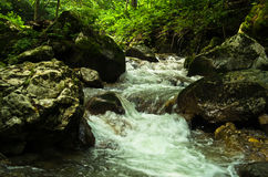 Kreek bij de voet van Tara berg en nationaal park Stock Foto