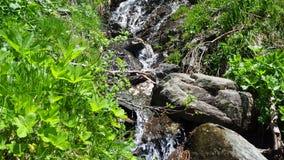 Kreek bij Italiaanse Alpen Schoon en oorspronkelijk water stock video