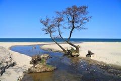 Kreek die in de Oostzee stromen Stock Afbeeldingen