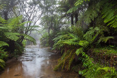 Kreek die door een regenwoud in ochtendmist vloeien Royalty-vrije Stock Afbeelding