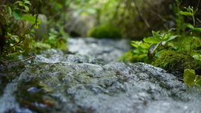 Kreek die in het bos stromen stock video