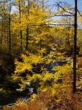 Kreek die het kleurrijke de herfstbos doornemen Royalty-vrije Stock Fotografie
