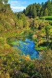 Kreek die van de mooie Blauwe Lente, Te Waihou, Nieuw Zeeland leiden stock fotografie