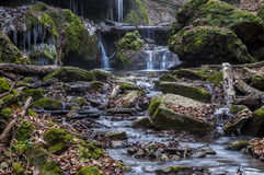 Kreek diep in het bos Stock Foto