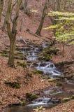Kreek diep in het bos Stock Afbeeldingen