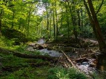 Kreek door Weelderig Bos, Worthington-het Bos van de Staat Stock Fotografie