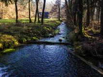 Kreek in een moeras in de herfst Stock Foto's
