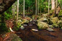 Kreek in een Subtropisch Regenwoud - Australië stock afbeeldingen