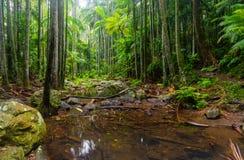 Kreek in een Subtropisch Regenwoud - Australië royalty-vrije stock foto's