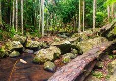 Kreek in een Subtropisch Regenwoud - Australië stock fotografie