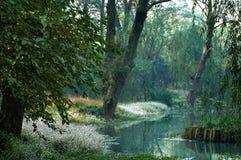 Kreek in het bos Stock Afbeeldingen