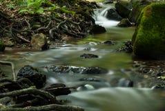 Kreek in het bos Royalty-vrije Stock Afbeelding