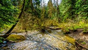 Kreek in het gematigde regenwoud van Rolley-Meer Provinciaal Park stock afbeelding