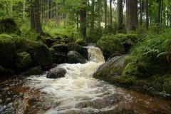 Kreek in het hout Kleine wilde rivier Royalty-vrije Stock Afbeeldingen