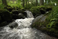 Kreek in het hout Kleine wilde rivier Stock Fotografie