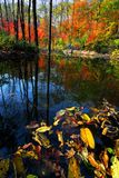 Kreek in het hout tijdens de herfst Royalty-vrije Stock Fotografie