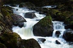 Kreek met lopend water en stenen (rotsen) stock foto