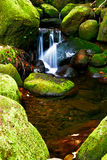 Kreek in wildernis van Hawaï Stock Foto