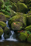 Kreek in wildernis van Hawaï Stock Foto's