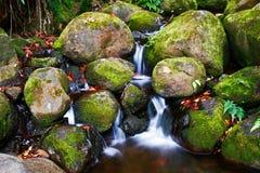 Kreek in wildernis van Hawaï Royalty-vrije Stock Foto's