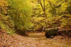 Kreekbed met gevallen bladeren in de herfst wordt behandeld die Royalty-vrije Stock Foto