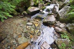 Kreekwater met rotsen Stock Afbeeldingen