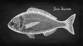 Kreideskizze von Vergoldung-köpfigen Seebrassenfischen lizenzfreie abbildung